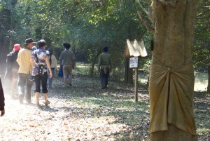Filming on the fly in a community forest by the Mae Ing river