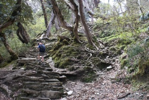 Climbing through rhododendron forest to Ghoropani